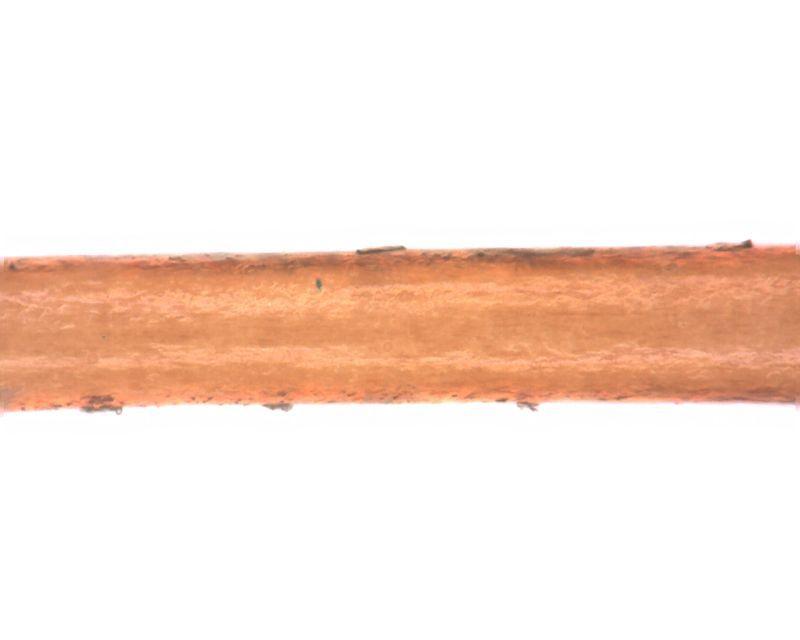 【マイクロスコープの斉藤光学です】人毛・獣毛を観察しました。_c0164695_15134545.jpg