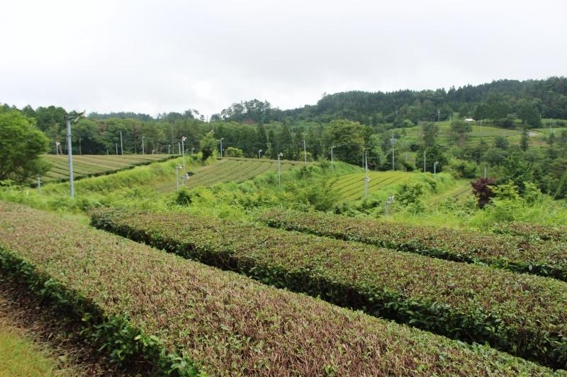 Kさんの畑、美しすぎるモノたち_b0220318_08152762.jpg