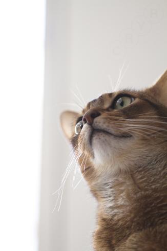 [猫的]目線_e0090124_22523676.jpg