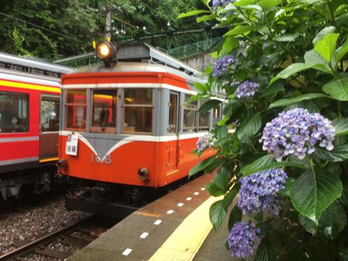 箱根登山鉄道のモハ1とあじさい_b0283432_19520196.jpg