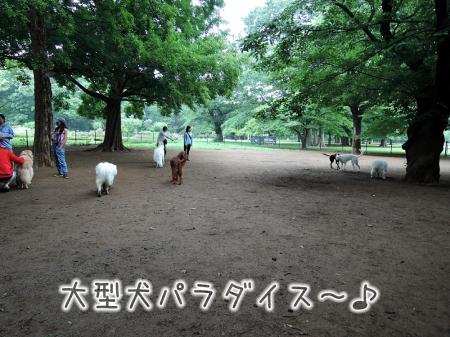 おっきな公園ドッグラン_c0062832_14281554.jpg