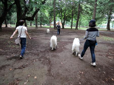 おっきな公園ドッグラン_c0062832_14281577.jpg