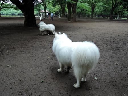 おっきな公園ドッグラン_c0062832_14281611.jpg