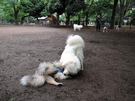 おっきな公園ドッグラン_c0062832_14281684.jpg
