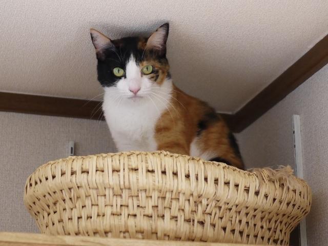 猫のお留守番 みーたんちゃん編。_a0143140_22474398.jpg