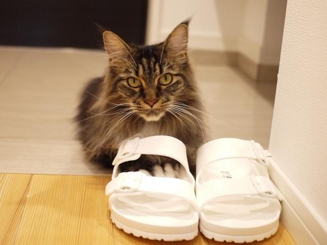 猫のお留守番 紙音ちゃん編。_a0143140_23032302.jpg