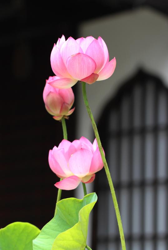 革堂(行願寺)_b0186148_17402071.jpg