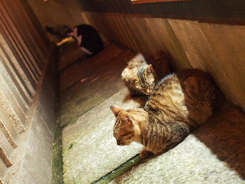 【ねこPhoto】法善寺のネコさんたち_b0008655_00002271.jpg