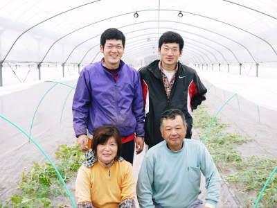 熊本産高級マスクメロン『肥後グリーン』はお中元にも大人気!シャキシャキとトロトロ!2つの食感をぜひ!_a0254656_17493626.jpg