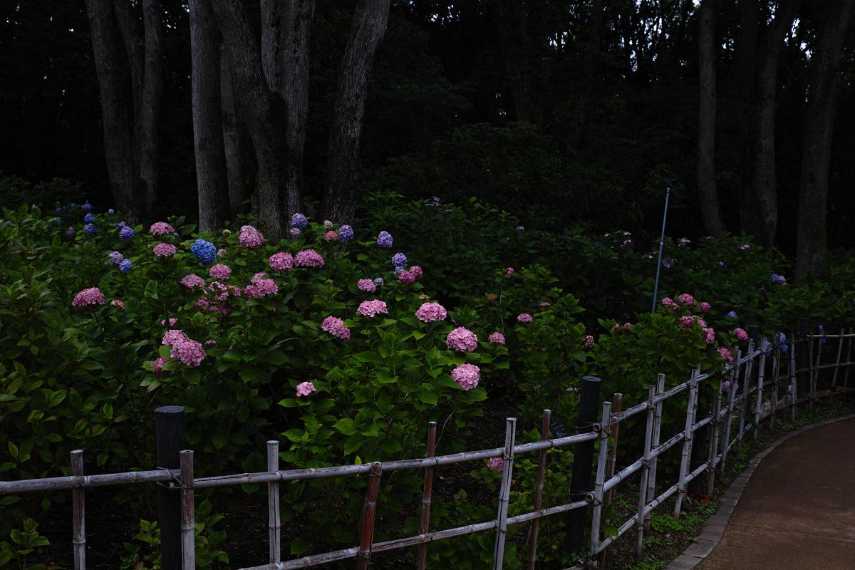 万博公園_f0021869_00141560.jpg