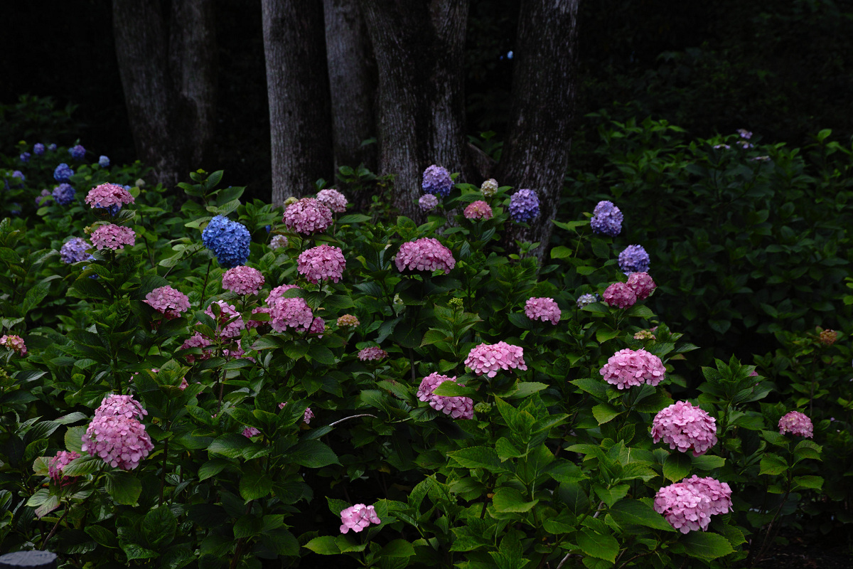万博公園_f0021869_00141686.jpg