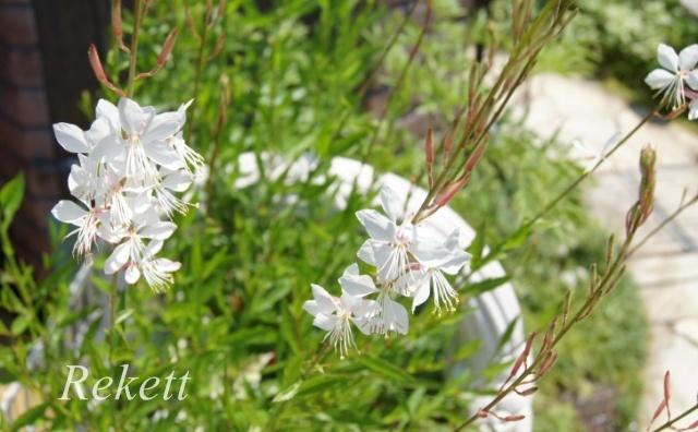 今年も綺麗に咲いてくれました~_f0029571_01491059.jpg