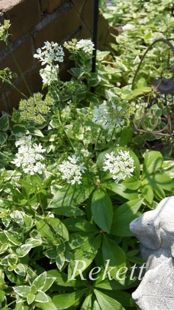 ガーデンにお勧めな植物~❤_f0029571_01500968.jpg
