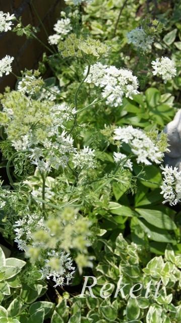 ガーデンにお勧めな植物~❤_f0029571_01504166.jpg
