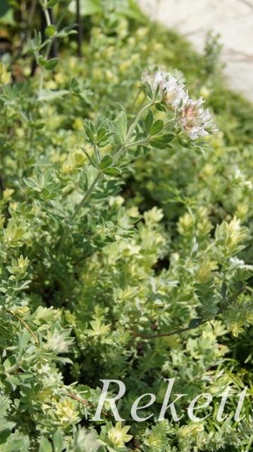 ガーデンにお勧めな植物~❤_f0029571_01511438.jpg