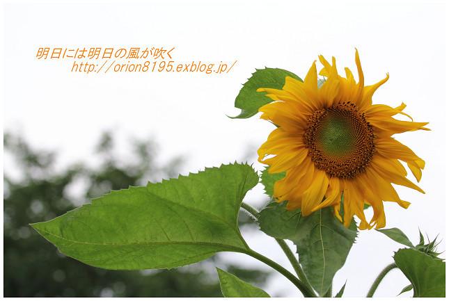 f0361079_19224157.jpg