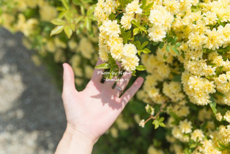 e0352091_20105429.jpg