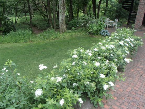 雨の合間の草取り芝刈り&今の花たち_f0064906_16075692.jpg
