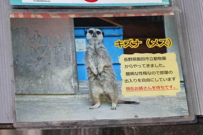 智光山公園こども動物園のミーアキャットたち(October 2018)_b0355317_22241593.jpg
