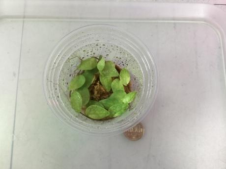 190703 熱帯魚 金魚 めだか 水草  観葉植物_f0189122_15002743.jpeg