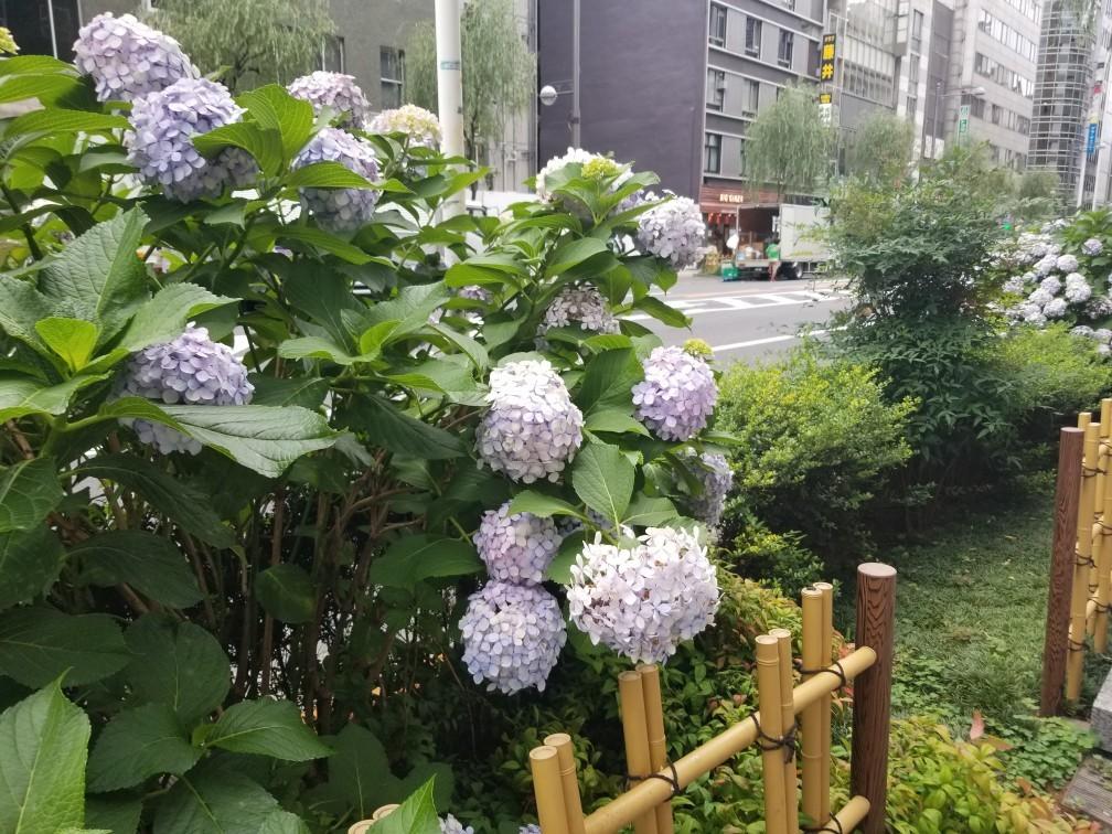 ♪2019初夏★銀座模様_d0162225_23164386.jpg