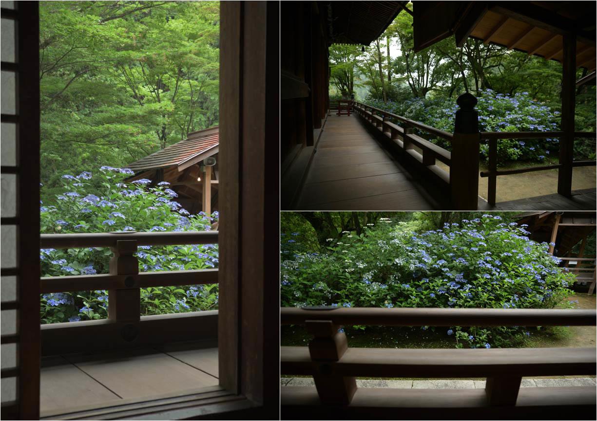 京都紫陽花寺_e0272231_16174234.jpg