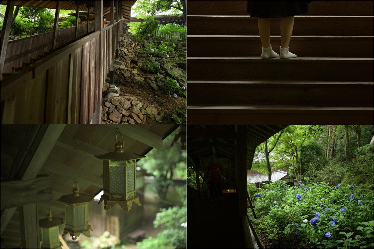 京都紫陽花寺_e0272231_16175977.jpg