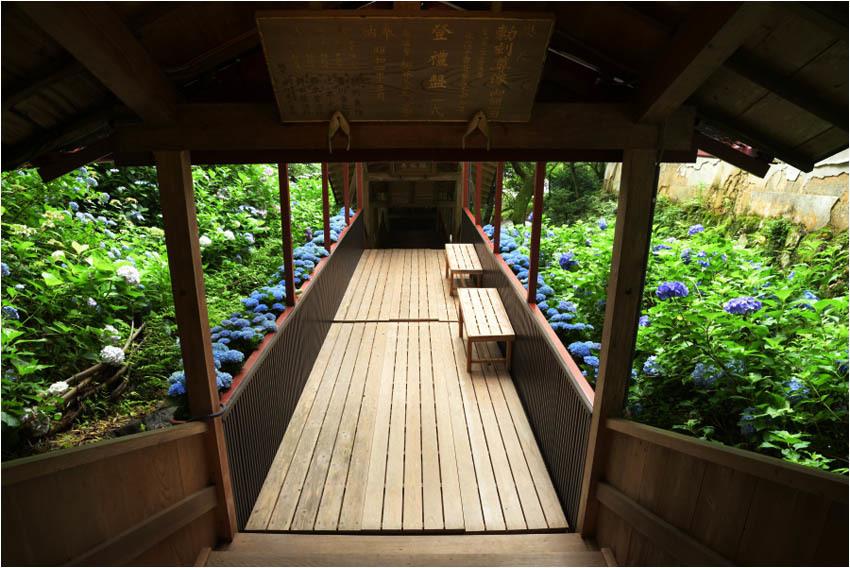 京都紫陽花寺_e0272231_16511252.jpg