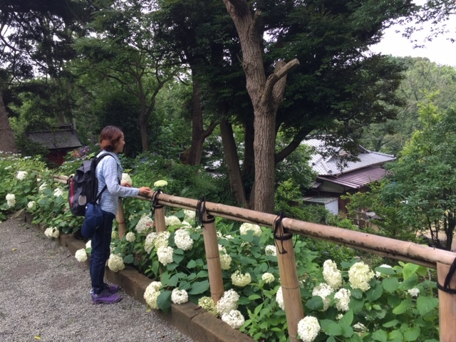 来年に向けての準備に! 葛原岡神社の紫陽花を♪_d0108933_01552604.jpg