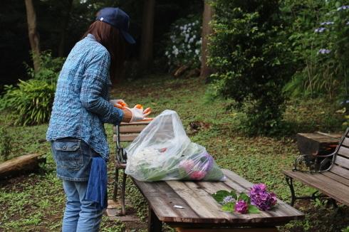 来年に向けての準備に! 葛原岡神社の紫陽花を♪_d0108933_02294451.jpg