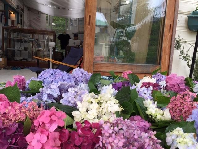 来年に向けての準備に! 葛原岡神社の紫陽花を♪_d0108933_03033890.jpg