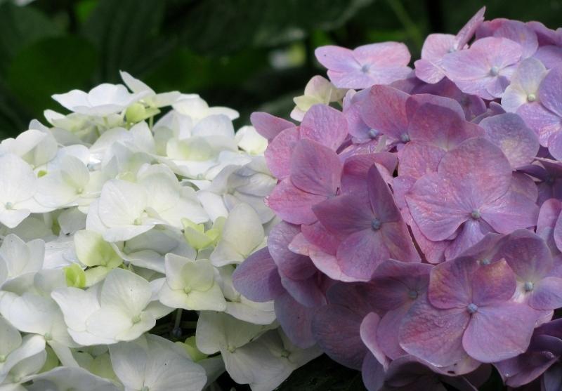 ヴェニスの紫陽花ホテル *Albergo Ortensia_f0374041_11271604.jpg