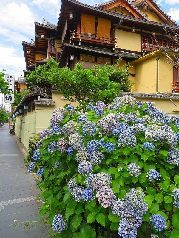 京都木屋町通の花々20190628_e0237645_19143528.jpg