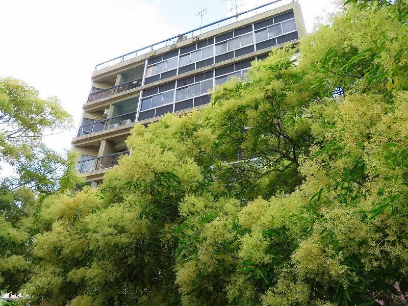 京都木屋町通の花々20190628_e0237645_19143545.jpg