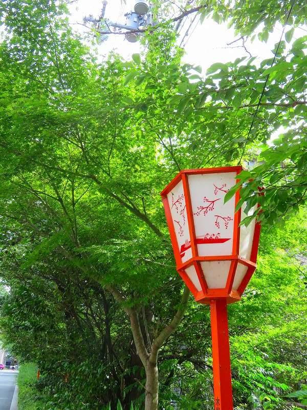 京都木屋町通の花々20190628_e0237645_19143639.jpg