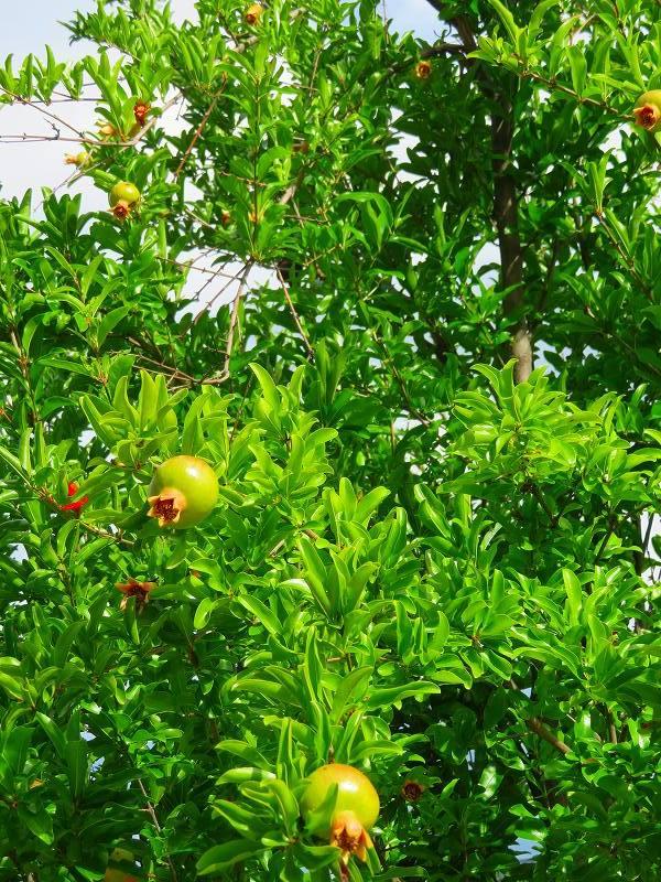 京都木屋町通の花々20190628_e0237645_19151874.jpg