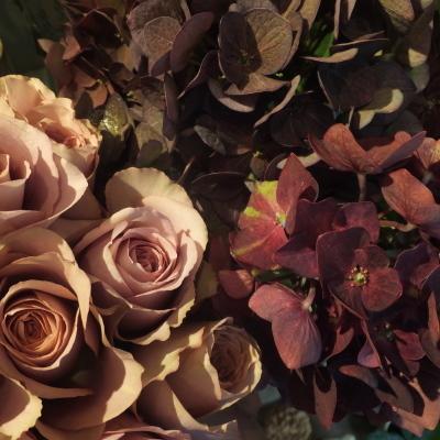 オークリーフ(テーブルサイズの観葉植物)_f0049672_16305904.jpg