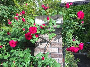バラ園をはしご_e0182479_14534190.jpg