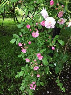 バラ園をはしご_e0182479_14534434.jpg