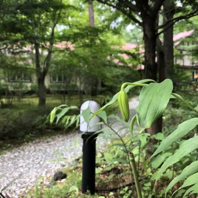 「THE」軽井沢_b0101300_14064898.jpg