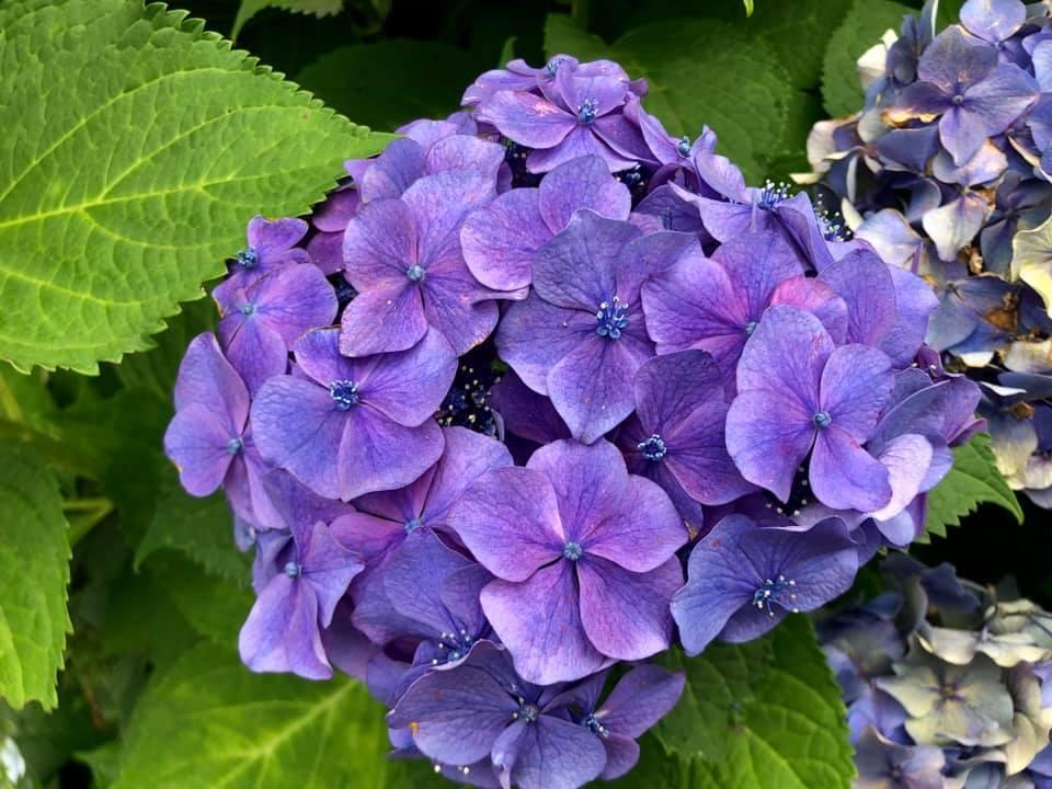 *紫陽花*_e0197227_14283162.jpg