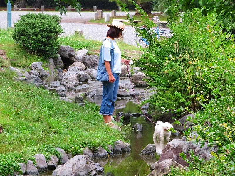 京都御苑「蛤御門~堺町御門」を歩く20190701_e0237645_22271952.jpg