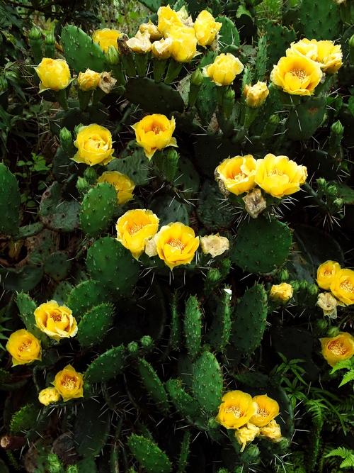 農的庭の花・・・アジサイカット&パーマ_d0005250_17545367.jpg