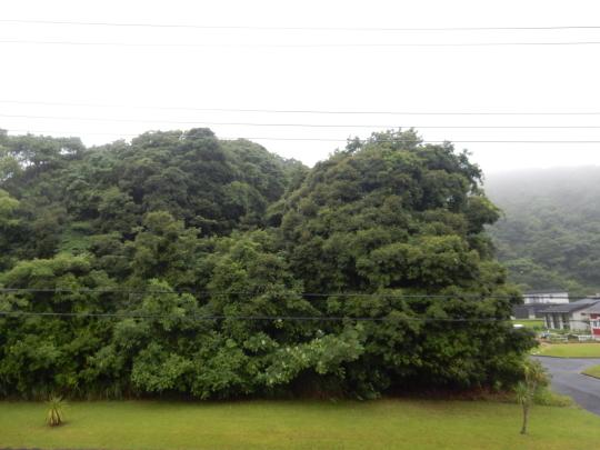'19,7,4(木)勝浦も朝から大雨です!_f0060461_09030241.jpg