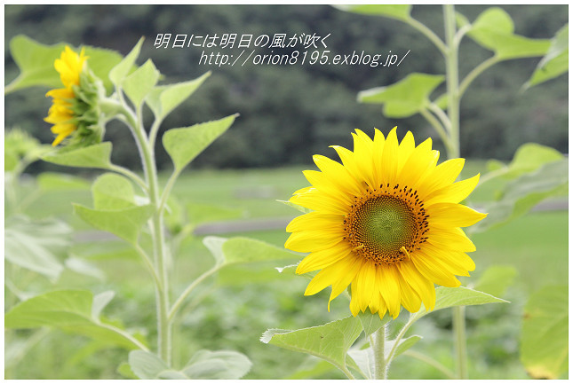 f0361079_23581492.jpg