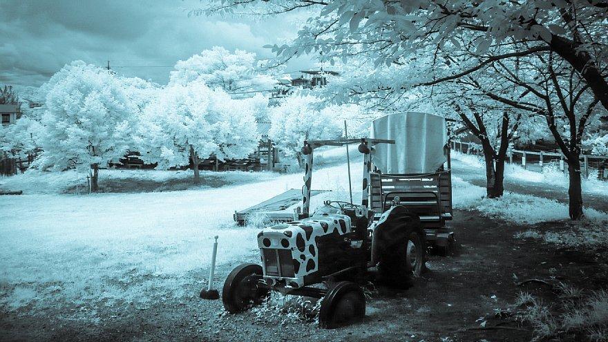 想いあふれる7月の白い牧場_d0353489_19445005.jpg