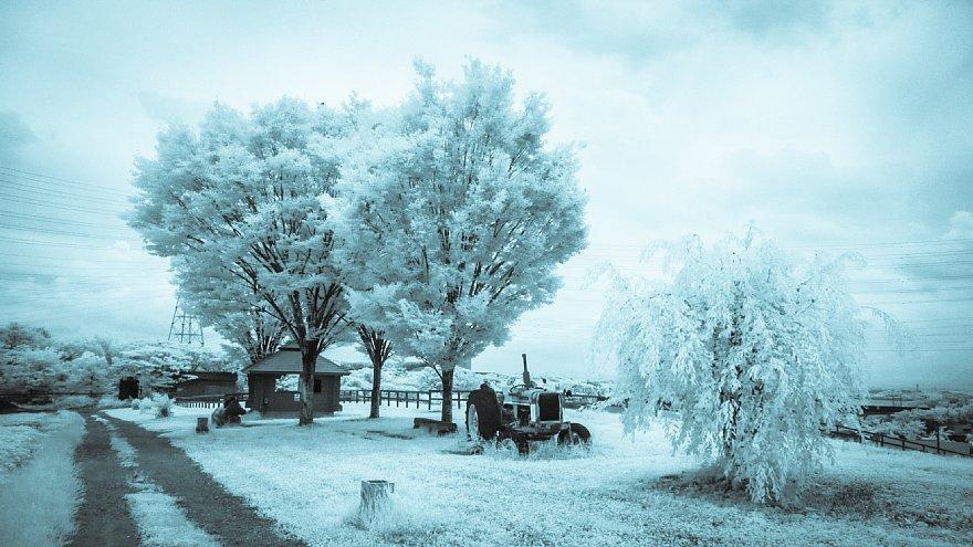 想いあふれる7月の白い牧場_d0353489_19452834.jpg