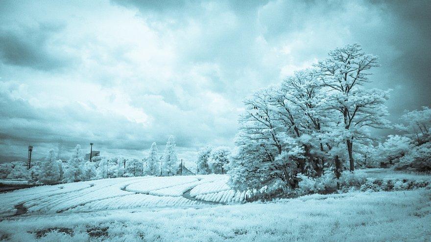 想いあふれる7月の白い牧場_d0353489_19460083.jpg