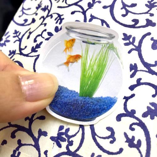 金魚の寿命は?_d0225198_16045398.jpeg