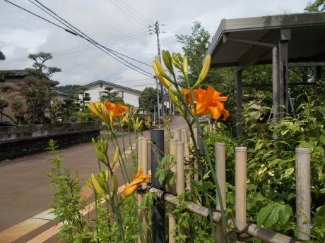 垣根に沖縄スズメウリの実_a0203003_15080945.jpg